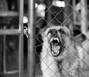 huntersville guard dogs